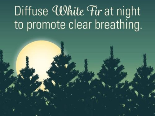Diffuser white fir essential oil at night to promote clear breathing