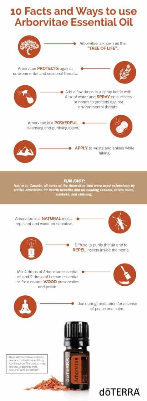 10 Facts and Ways to Use Arborvitae Essential Oil