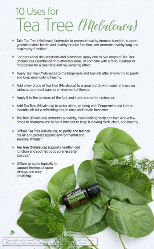 Doterra Melaleuca Essential Oil Uses Tea Tree