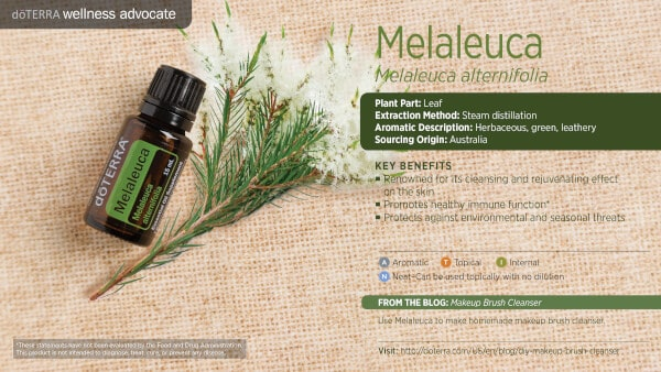 doTERRA melaleuca Essential Oil Uses