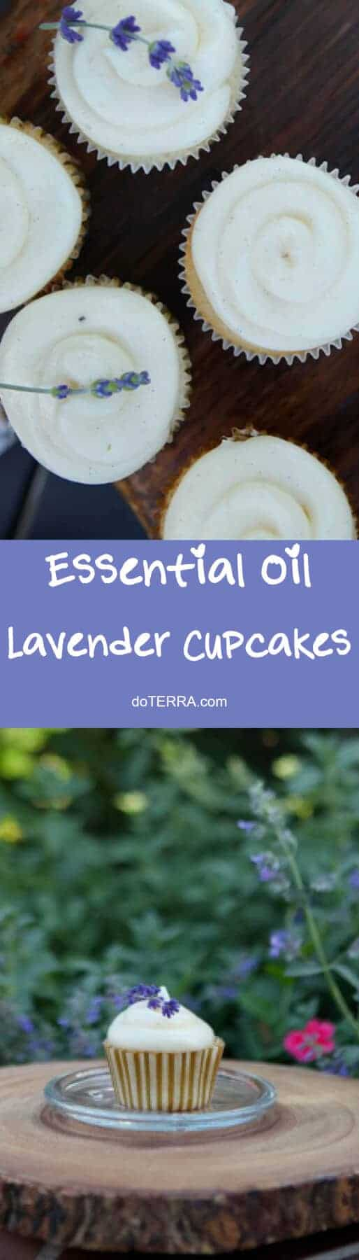 doTERRA Lavender Cupcakes with Lavender Cream Cheese Frosting Recipe Lavender Essential Oil Uses