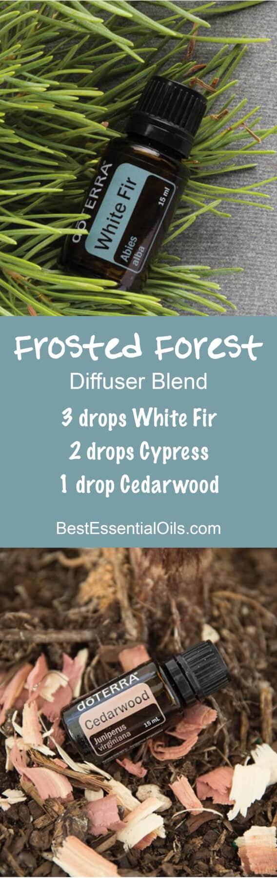 Frosted Forest doTERRA Diffuser Blend