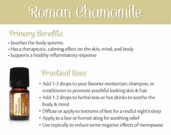 Roman Chamomile Benefits and Uses