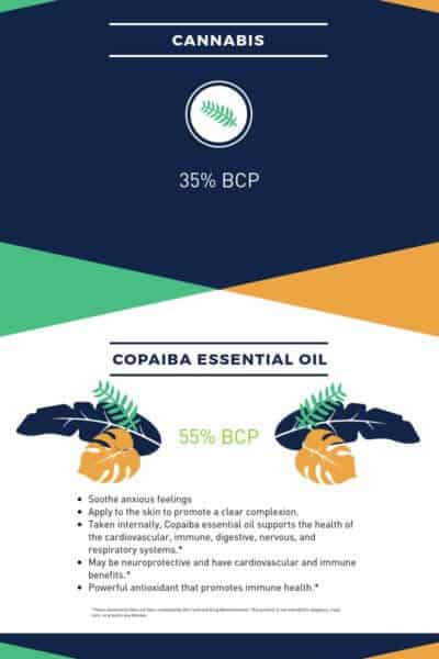 doTERRA Copaiba Essential Oil vs Cannabis or CBD Oil