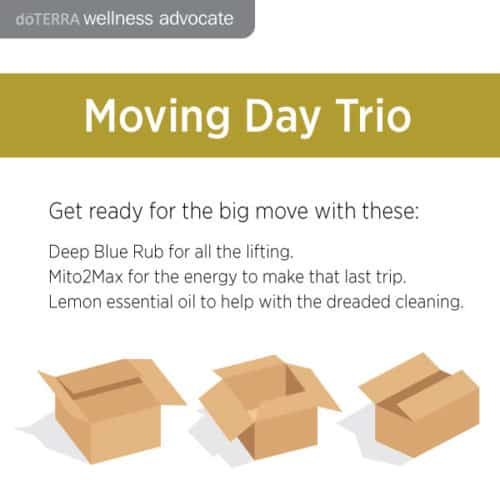 Moving Day Trio