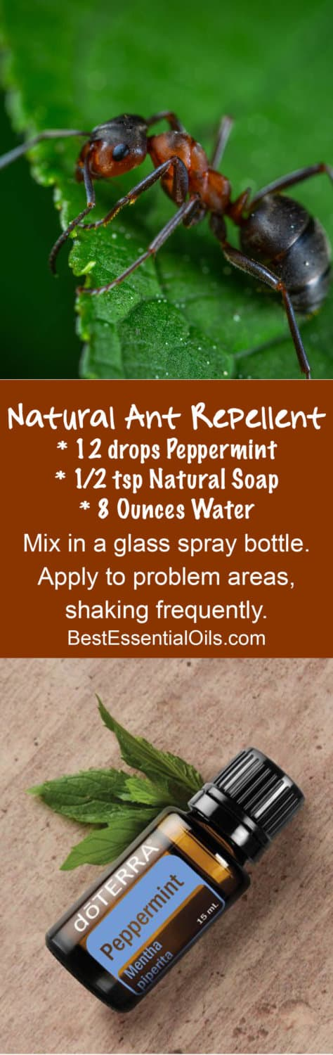 doTERRA Natural Ant Repellent