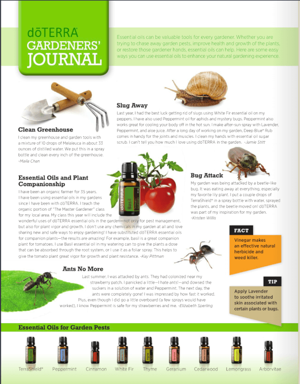 doTERRA and bugs in the Garden