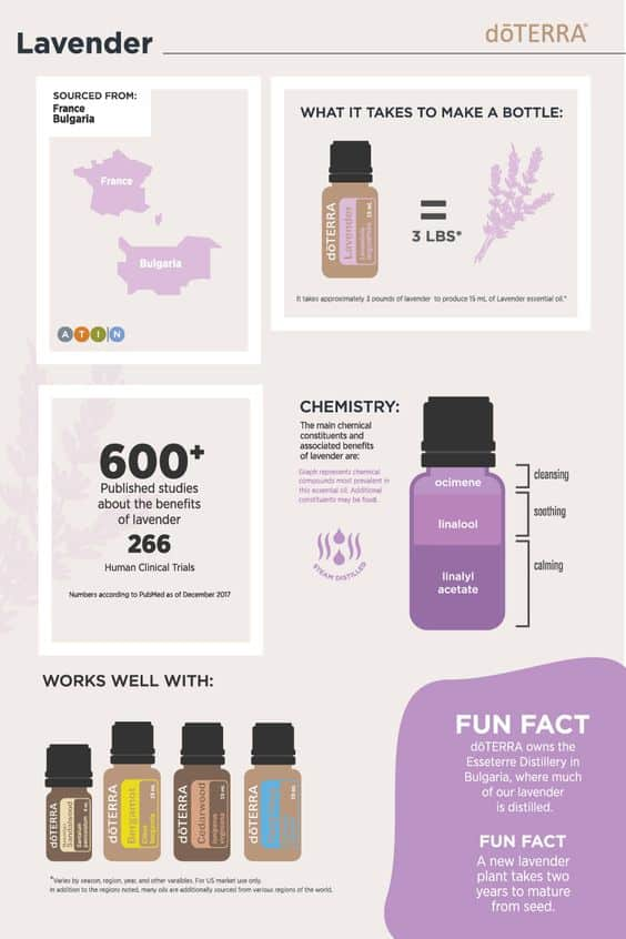 Get to Know Lavender Essential Oil