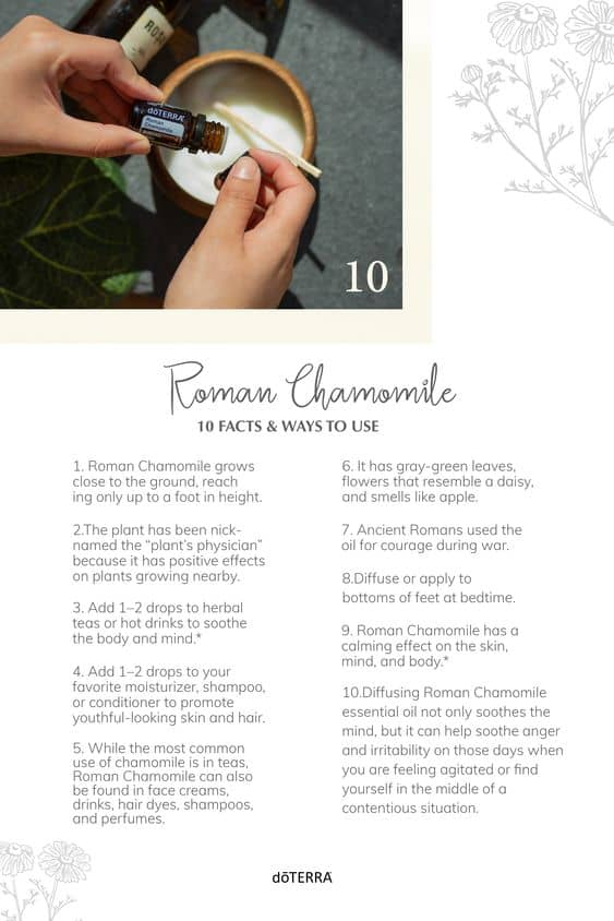 10 Facts & Ways to Use Roman Chamomile Essential Oil